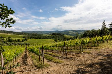 Image gallery Our Vineyards