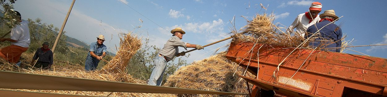 Header image Threshing wheat
