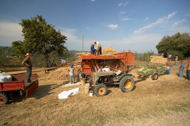 Image gallery Threshing wheat